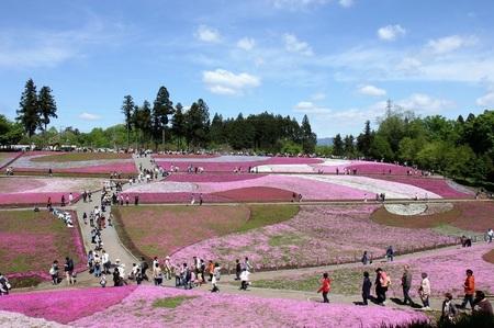 羊山公園の芝桜まつり.jpg